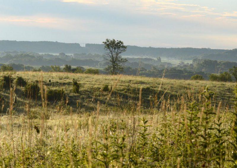 Afton Prairie Beauty - Photo Credit John Stewart