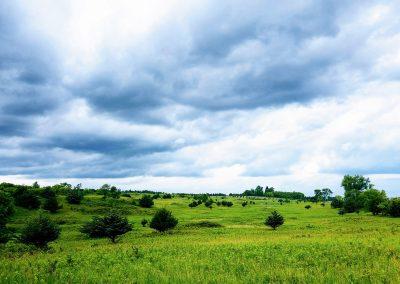 Afton Prairie Beauty - Photo Credit John Storkamp
