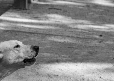 Aid Station Dog BW - Photo Credit Jamison Swift