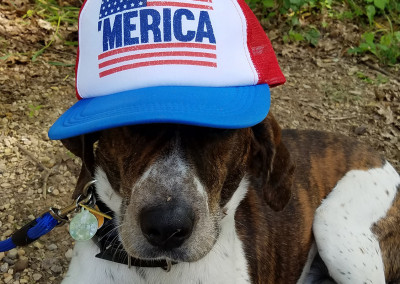 Merica Dog - Photo Credit Laurel Sipe