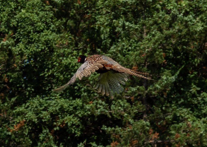 Natural Afton - Photo Credit Zach Pierce