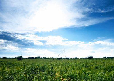 Prairie Flowers - Photo Credit John Storkamp