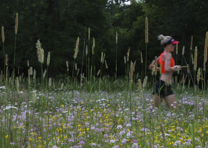 Wild Among the Wildflowers - Photo Credit Chad Richardson